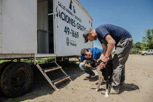 Día del Animal – Castraciones, vacunación, denuncias, tenencias responsables