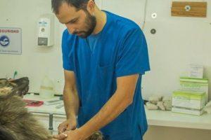 Día del Médico veterinario – Cuidado de las mascotas y los humanos – Psitacosis