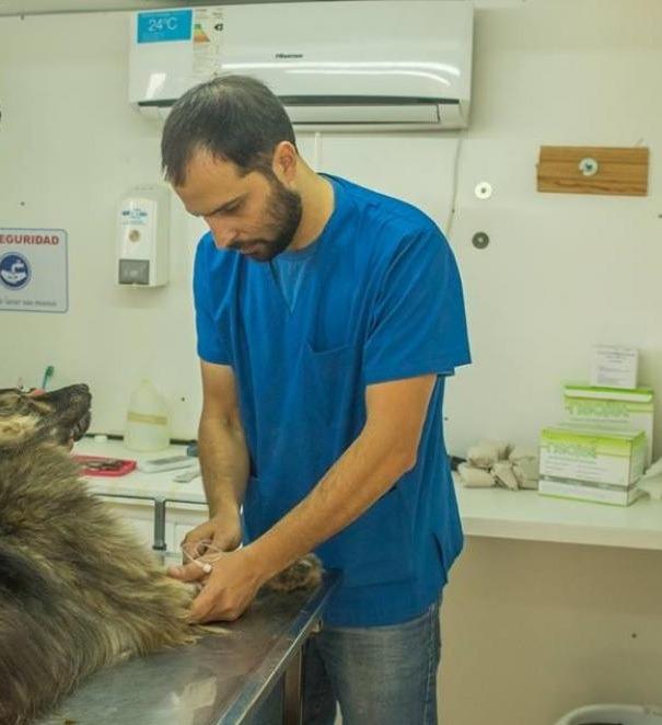 En este momento estás viendo Día del Médico veterinario – Cuidado de las mascotas y los humanos – Psitacosis