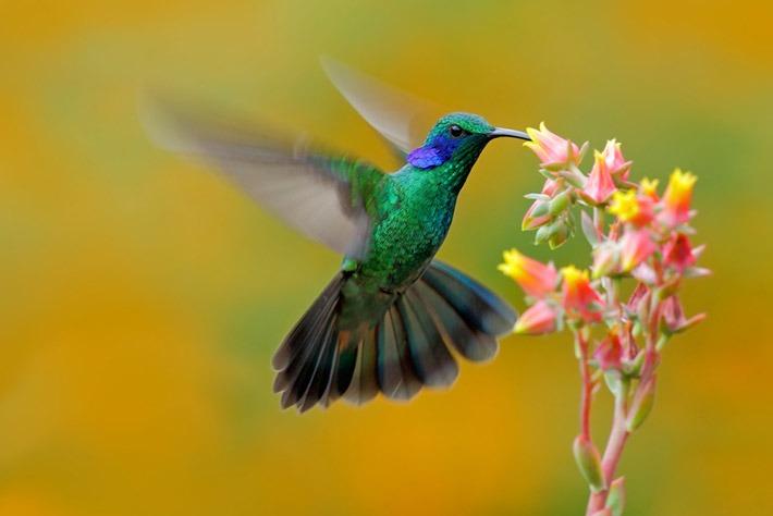Cariló: primer jardín de colibríes del país – Maximiliano Macaluse